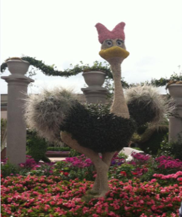 Fantasia Ostrich