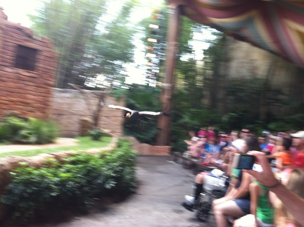 Flights of Wonder at Animal Kingdom