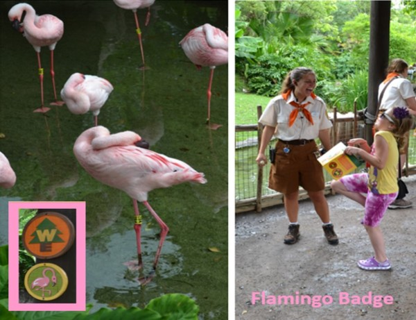 Flamingo Badge at Animal Kingdom Wilderness Explorers